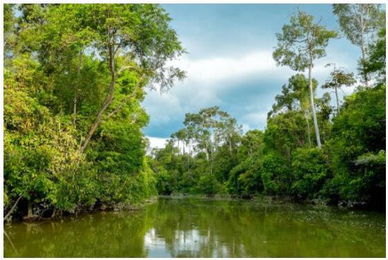 Kinabatangan River at Sukau